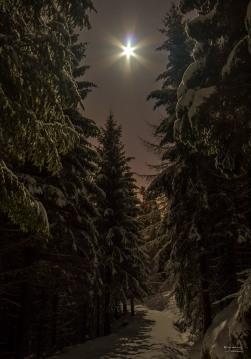 Måneskinnsnatt i Elsterparken - Fotograf Øyvind Blomstereng